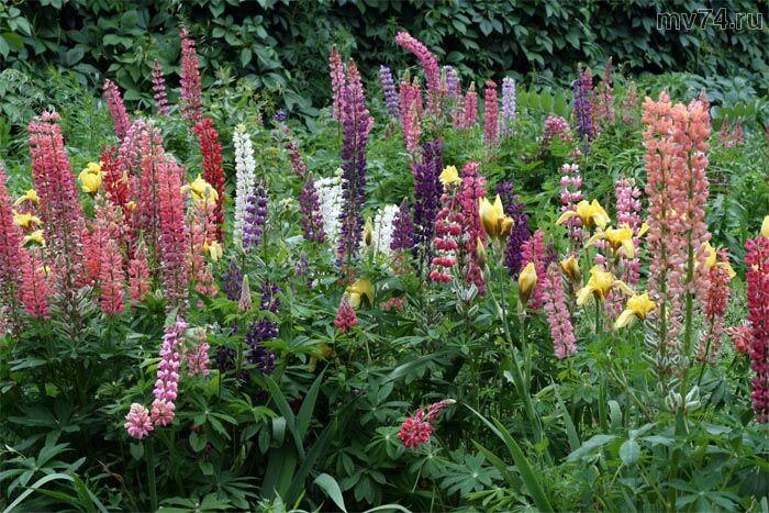 Необычные растения
