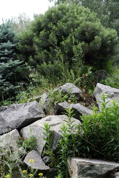 Тропические растения на Урале