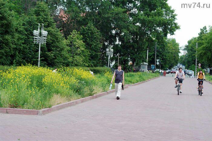 Цветы Челябинска. сурепка