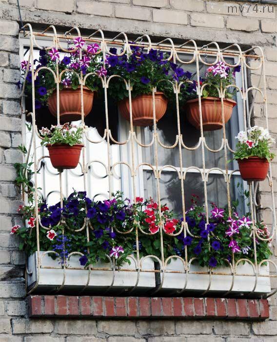 Цветы Челябинска.Окно в цветах